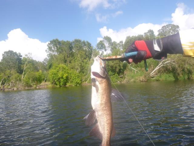 43cm Catfish :/