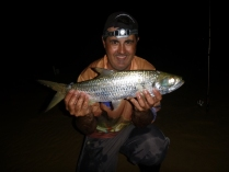 Tarpon are a great sportfish and a real handful on light gear