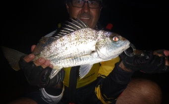 A 48cm Grunter taken on Yabbies